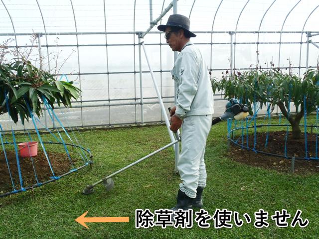 除草剤を使いません