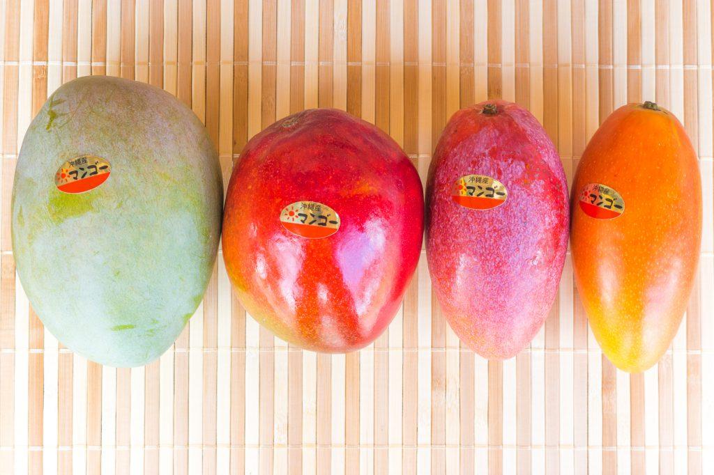 幻のマンゴー、完売しました