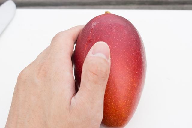 アップルマンゴーの果皮がやわらかくなると食べごろです
