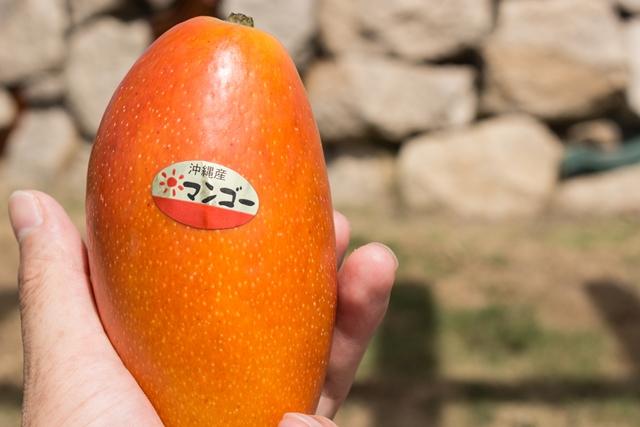 オレンジ色の紅龍マンゴー