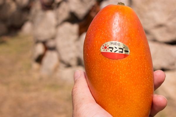 紅龍マンゴーは、鮮やかな気品漂うマンゴーです