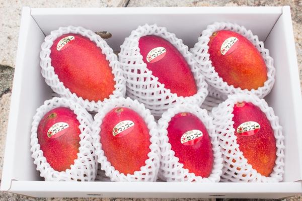 どのマンゴーもつややかで美味しいです