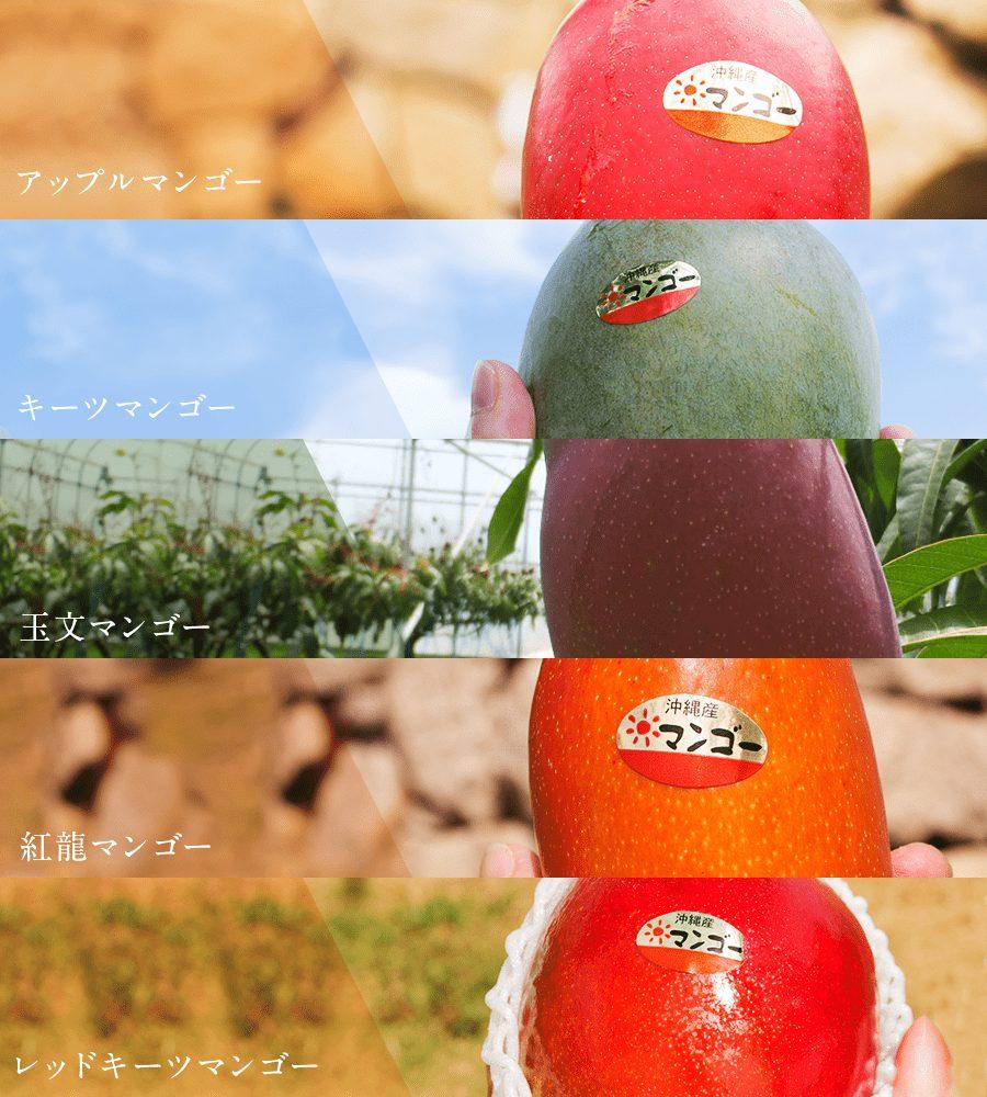 幻のマンゴーを含む5種類を通販でお楽しみいただけます