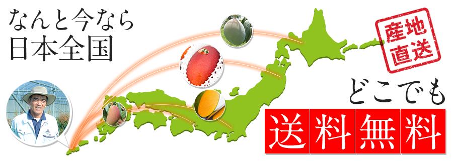 マンゴーが今なら日本全国どこでも送料無料です