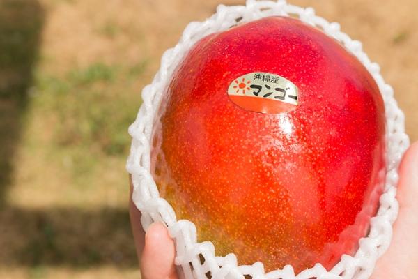 しっかり色の出たレッドキールマンゴー