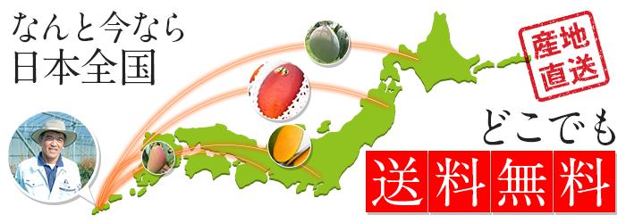 なんと今なら、マンゴーが日本全国どこでも送料無料です