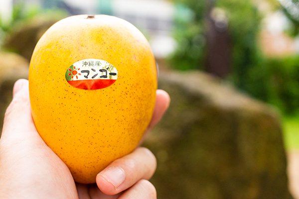 金蜜マンゴーは、黄金色の香りのよいマンゴーです